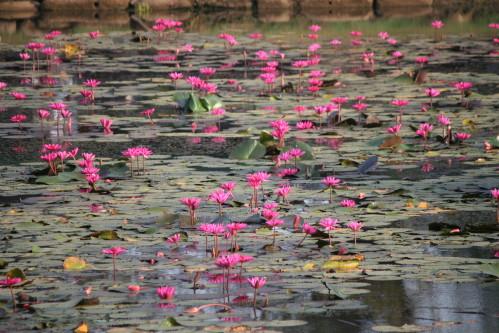 cambodge2-126
